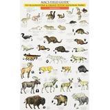 Mac's Field Guides: Yellowstone Birds & Mammals