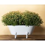 Gracie Oaks Kolb Metal Pot Planter Metal in Gray/White, Size 9.0 H x 11.0 W x 20.25 D in | Wayfair FDAD03122