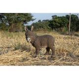 Hi-Line Gift Ltd. Standing Donkey Looking Left Statue Resin/Plastic in Brown, Size 20.67 H x 9.25 W x 19.69 D in | Wayfair 87974-B