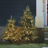 Staked Twinkling Frasier Fir Tree 3' - Ballard Designs