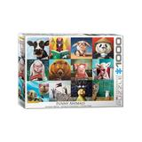 Eurographics Puzzles - Animal Portraits by Lucia Heffernan 1,000-Piece Puzzle