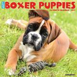Willow Creek Press Boxer Puppies 2021 Calendar, Large