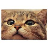 Cute Cat Look At You With Eager Eyes On Table 1000 Piece - Large Format Jigsaw Puzzles.Logic Games for Couples, Child, Teens, Senior. Brain Puzzles & Fun Family Games. Beautiful Picture & Puzzles.