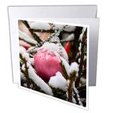 3dRose Large Pink Ornament Ball, Glass Beads on a Christmas Tree in. - Greeting Cards (gc_340596_2)