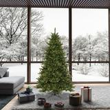 The Holiday Aisle® Allenspark 6.5' Green Artificial Christmas Tree w/ 600 Clear Lights w/ Stand in Green/White, Size 78.0 H x 49.0 W x 49.0 D in