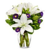 Flowers - Blooming Lily Joy