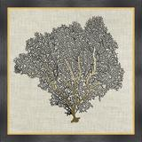 Vintage Print Gallery Sea Fan II - Picture Frame Graphic Art Print on Paper Paper in Black/Brown/Gray, Size 34.0 H x 34.0 W x 1.0 D in | Wayfair
