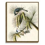 Vintage Print Gallery 'Audubon Bird I' - Picture Frame Graphic Art Print on Canvas Canvas & Fabric in Blue/Brown/Gray | Wayfair 1111-79