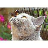 1000 Puzzles Pieces/Butterfly cat Animal(50x75cm)Game Wooden Puzzles Toy Gift for Home Wall Decoration Puzzle Floor Puzzle