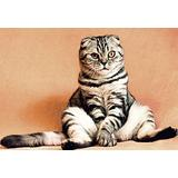 1000 Puzzles Pieces/Portrait cat Animal(50x75cm)Game Wooden Puzzles Toy Gift for Home Wall Decoration Puzzle Floor Puzzle