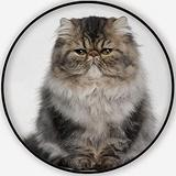 Persian Kitten,Round Rug,Area Rug 4 Months Old Non-Slip Backing Round Area Rug Living Room Bedroom Study Children Playroom Carpet Floor Mat 3.3'Round