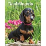 Dachshunds 2020 6 x 7.75 Inch Weekly Engagement Calendar, Animals Dog Breeds