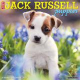 Willow Creek Press Just Jack Russell Puppies 2022 Wall Calendar