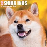 Willow Creek Press Just Shiba Inus 2022 Wall Calendar