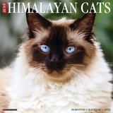 Willow Creek Press Just Himalayan Cats 2022 Wall Calendar