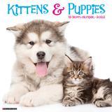 Willow Creek Press Kittens & Puppies 2022 Wall Calendar