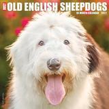 Willow Creek Press Just Old English Sheepdogs 2022 Wall Calendar