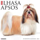 Willow Creek Press Just Lhasa Apsos 2022 Wall Calendar