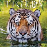Willow Creek Press Tigers 2022 Wall Calendar