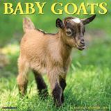 Willow Creek Press Baby Goats 2022 Wall Calendar