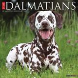 Willow Creek Press Just Dalmatians 2022 Wall Calendar