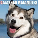Willow Creek Press Just Alaskan Malamutes 2022 Wall Calendar
