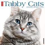 Willow Creek Press Just Tabby Cats 2022 Wall Calendar