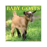 Willow Creek Press Calendars Various - Baby Goats 18-Month 2022 Wall Calendar