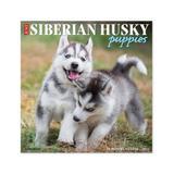 Willow Creek Press Calendars Various - Just Siberian Husky Puppies 18-Month 2022 Wall Calendar