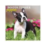 Willow Creek Press Calendars Various - Just Boston Terrier Puppies 18-Month 2022 Wall Calendar
