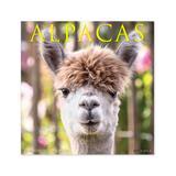 Willow Creek Press Calendars Various - Alpacas 18-Month 2022 Wall Calendar