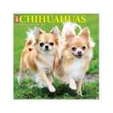 Willow Creek Press Calendars Various - Just Chihuahuas 18-Month 2022 Wall Calendar