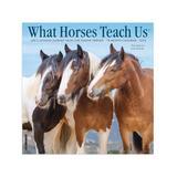Willow Creek Press Calendars Various - What Horses Teach Us 18-Month 2022 Wall Calendar