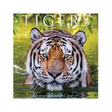 Willow Creek Press Calendars Various - Tigers 18-Month 2022 Wall Calendar