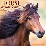 Willow Creek Press Horse: A Portrait 2022 Wall Calendar