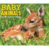 Willow Creek Press Baby Animals 2022 Box Calendar