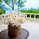 Primrue Artificial Flowers, Silk Daisy, Artificial Gerber Daisy For Home Decoration, Artificial Daisy For Wedding Decoration () … in White   Wayfair