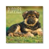 TF Publishing Calendars Multi - Puppies 12-Month 2022 Wall Calendar