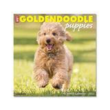 Willow Creek Press Calendars Various - Just Goldendoodle Puppies 18-Month 2022 Wall Calendar