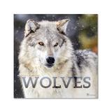 TF Publishing Calendars Multi - Wolves 12-Month 2022 Wall Calendar