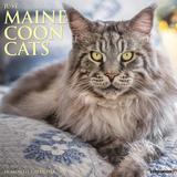 Willow Creek Press Just Maine Coon Cats 2022 Wall Calendar