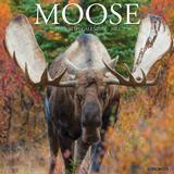 Willow Creek Press Moose 2022 Wall Calendar