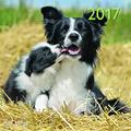 teNeues Family Dogs A & I ART & IMAGE Kalender 30 x 30 cm weiß