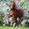 teNeues Horses A & I ART & IMAGE Kalender 30 x 30 cm weiß