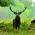 teNeues Forest & Meadow Animals A & I ART & IMAGE Kalender 30 x 30 cm weiß