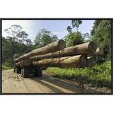 East Urban Home 'Truck w/ Timber From A Logging Area, Danum Valley Conservation Area, Borneo, Malaysia' Framed Photographic Print in Brown/Green
