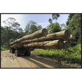 East Urban Home 'Truck w/ Timber From A Logging Area, Danum Valley Conservation Area, Borneo, Malaysia' Framed Photographic Print in White | Wayfair