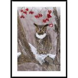 Global Gallery Great Horned Owl in Winter, Howell Nature Center, Michigan by Steve Gettle - Picture Frame Photograph Print on Paper Paper in Brown