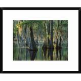 Global Gallery Bald Cypress Swamp, Sam Houston Jones State Park, Louisiana by Tim Fitzharris - Picture Frame Photograph Print on Paper Paper Wayfair
