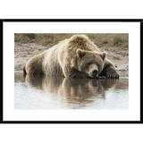 Global Gallery Grizzly Bear Sleeping on Shore, Katmai National Park, Alaska by Matthias Breiter - Picture Frame Photograph Print on Paper Paper